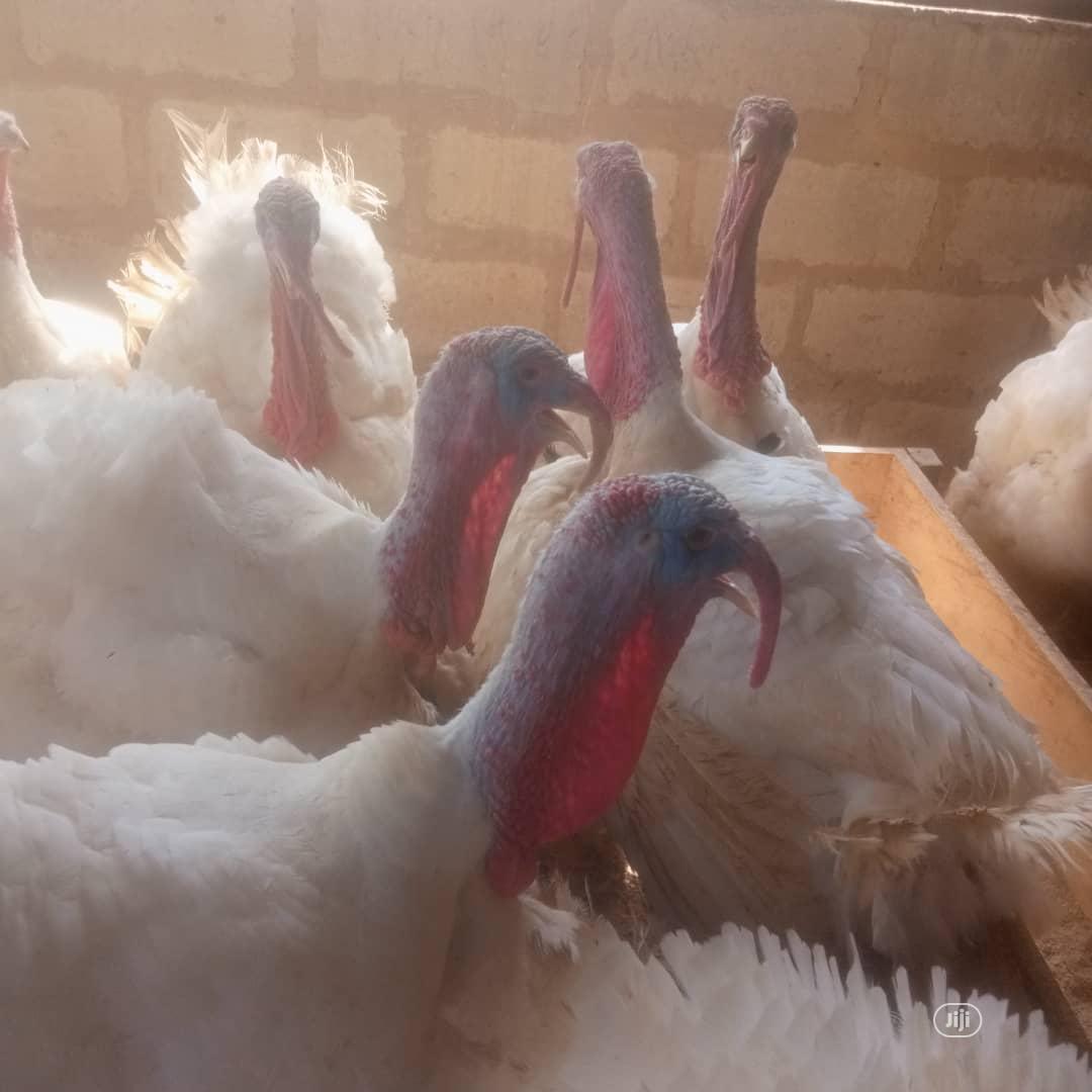Imported Turkey