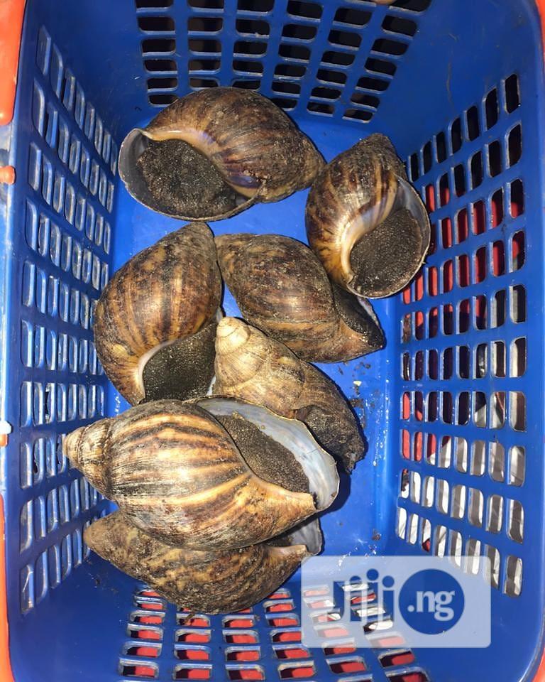 Fresh Farm Snails
