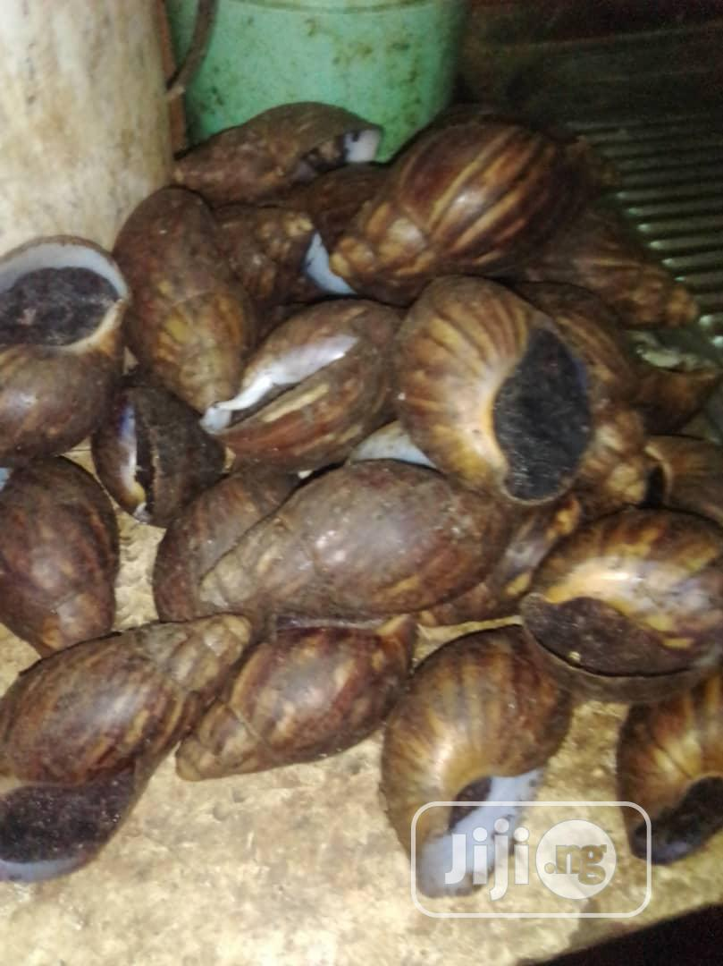 Fresh Farm Snails | Other Animals for sale in Abule Egba, Lagos State, Nigeria