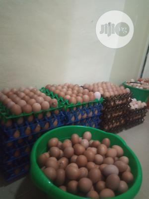 Eggs For Sale   Meals & Drinks for sale in Ogun State, Abeokuta South