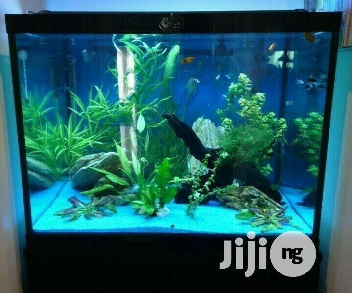 Massive Fish Tank Aquarium And Cabinets