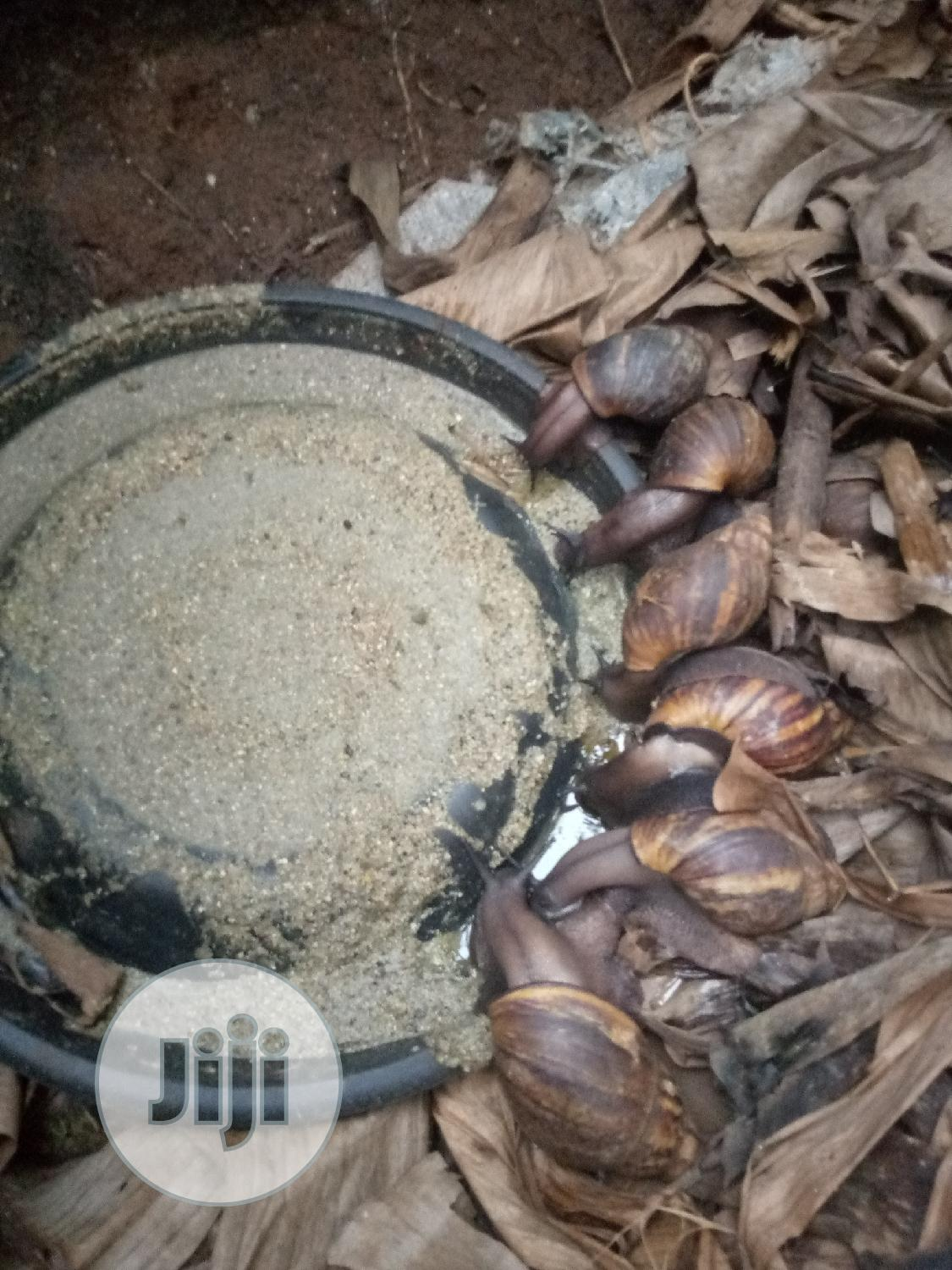 Snail Feeds | Other Animals for sale in Ado-Odo/Ota, Ogun State, Nigeria