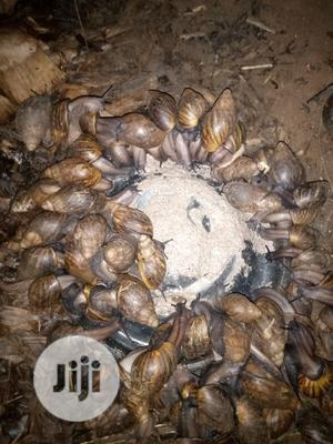 Snail Feeds   Feeds, Supplements & Seeds for sale in Ogun State, Ado-Odo/Ota