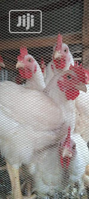 Broiler Chicken | Livestock & Poultry for sale in Lagos State, Ojodu