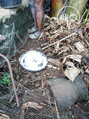 Snail Supplemented Organic Feeds | Feeds, Supplements & Seeds for sale in Ogun State, Ado-Odo/Ota