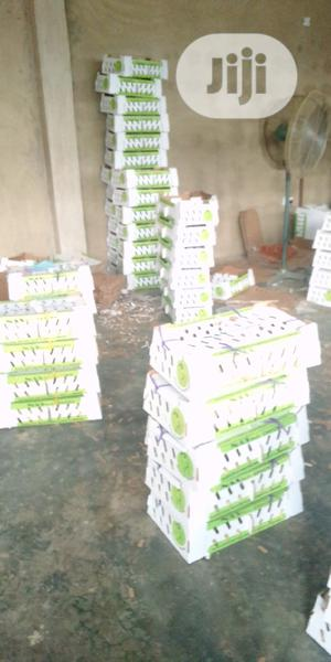 Day Old Chick   Livestock & Poultry for sale in Oyo State, Oluyole