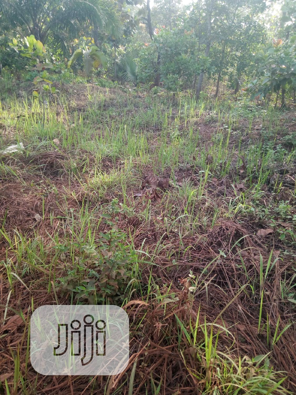 Land for Sale | Land & Plots For Sale for sale in Olamaboro, Kogi State, Nigeria