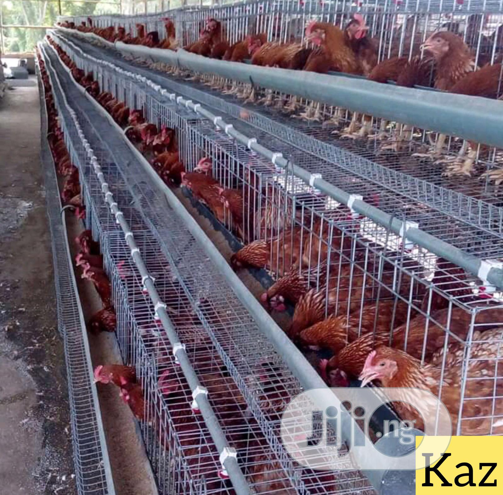 Authomatic Poultry Cage