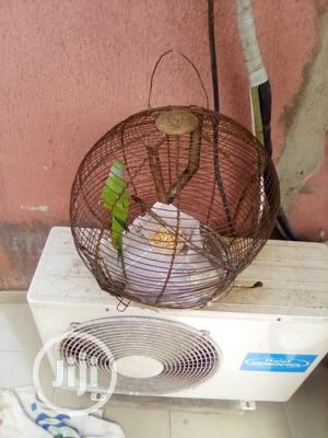 South Africa Parrot | Birds for sale in Lagos State, Egbe Idimu