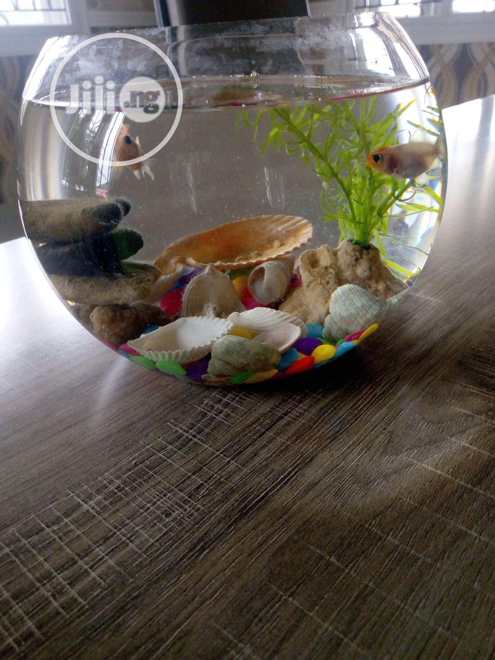 Archive: Fishbowl for Homes and Kids
