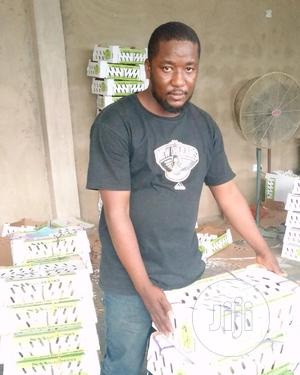 Day Old Chicken   Livestock & Poultry for sale in Oyo State, Oluyole
