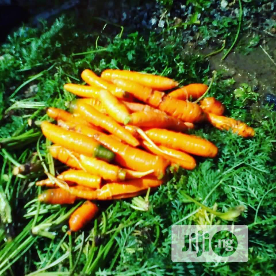 Archive: We Set Up Fruits and Veggies Home Garden