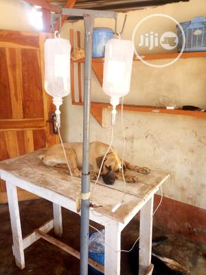 Veterinary Services | Pet Services for sale in Oyo State, Oyo
