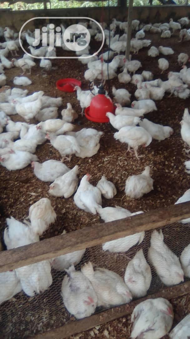 Archive: Ray Farms Broiler Chicken