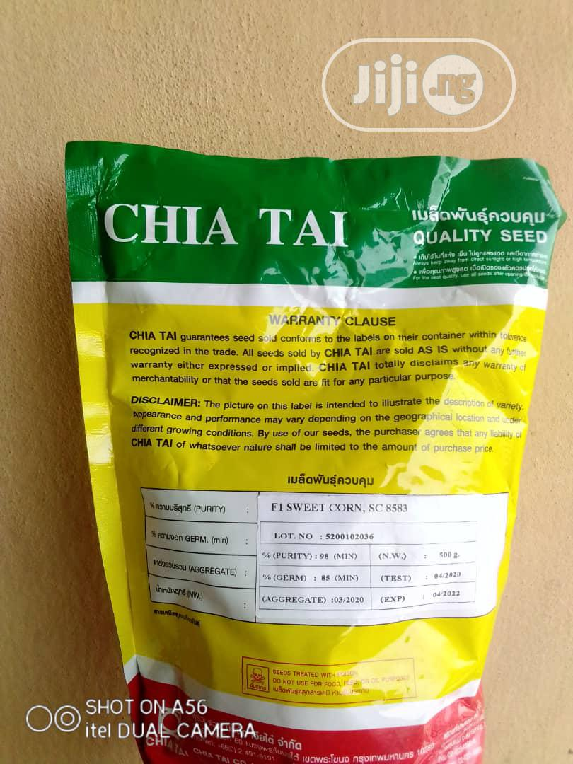 Archive: Chai Thai (SC 8583) Hybrid F1 Sweet Corn Seeds (500G) Pack