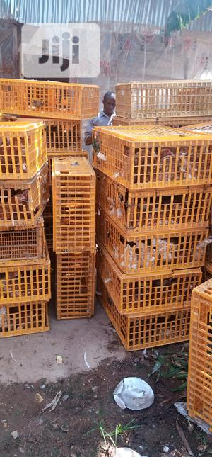 Point Of Lay   Livestock & Poultry for sale in Oyo State, Ibadan