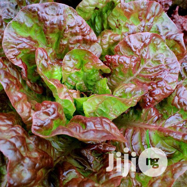 Archive: Marvel of Four Seasons Lettuce Seeds
