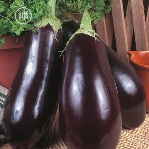 Egg Plant, Aubergine Or Brinjal Seeds | Feeds, Supplements & Seeds for sale in Lagos State, Amuwo-Odofin