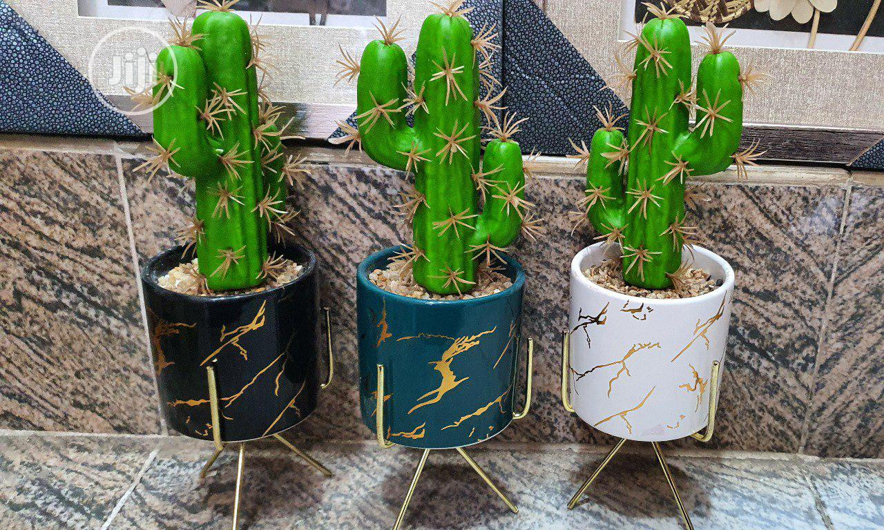 Cactus Plant With Pot Stand