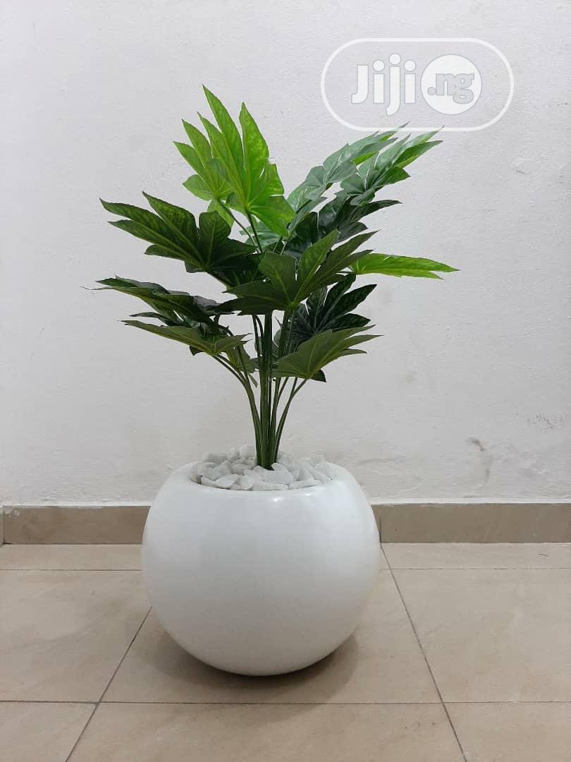 Archive: Mini Potted Plants With Fibre Vase