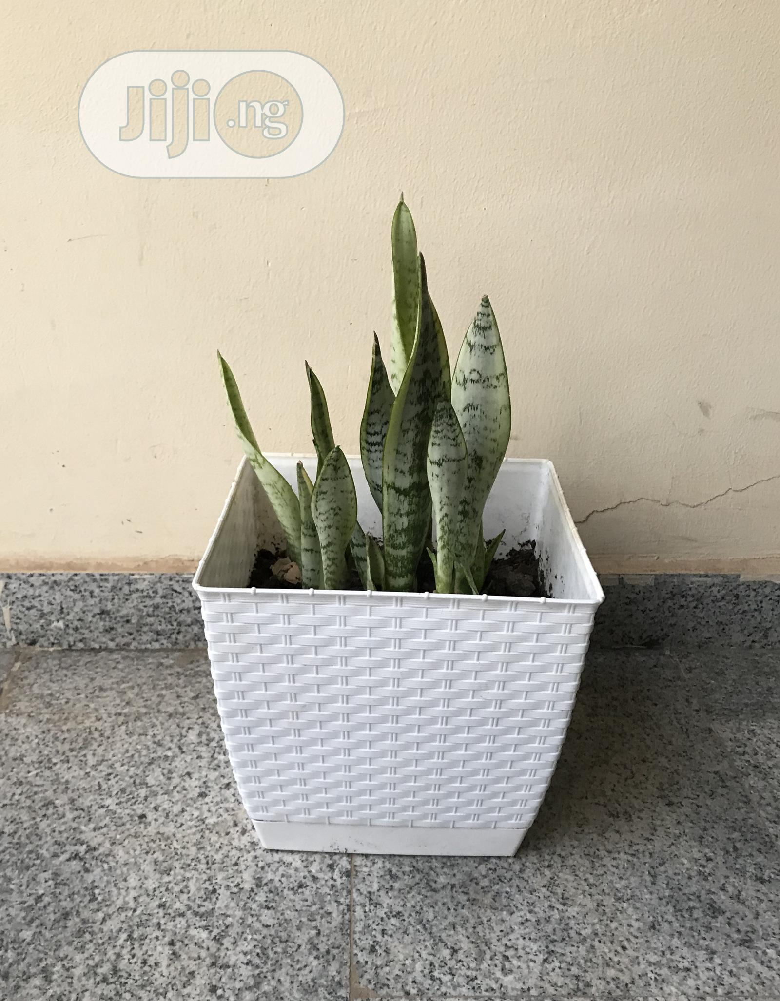 Indoor Plants | Garden for sale in Lokogoma, Abuja (FCT) State, Nigeria
