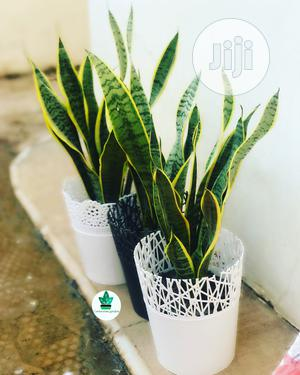Indoor Plants | Garden for sale in Abuja (FCT) State, Lokogoma