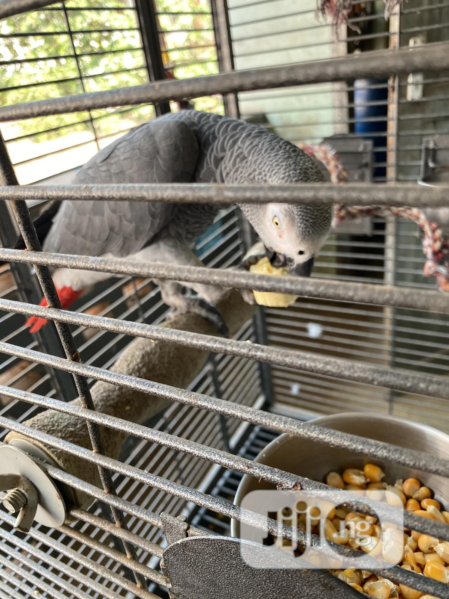 Archive: Talking Parrot