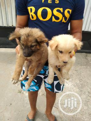 1-3 Month Female Mixed Breed Caucasian Shepherd | Dogs & Puppies for sale in Lagos State, Agboyi/Ketu