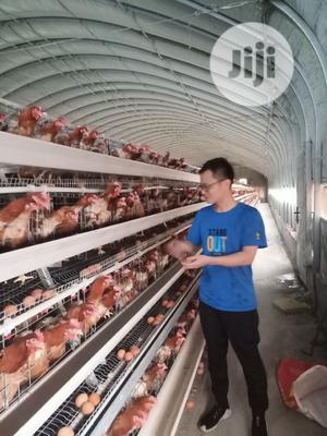 Poultry Cage / China Automatic Poultry Cage | Farm Machinery & Equipment for sale in Bayelsa State, Kolokuma/Opokuma