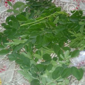 Moringa Leaves Supply/Farm | Feeds, Supplements & Seeds for sale in Lagos State, Ikorodu