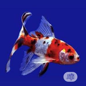 Aquarium Fishes of All Kinds | Fish for sale in Lagos State, Surulere