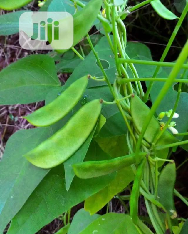 Grass and Legumes