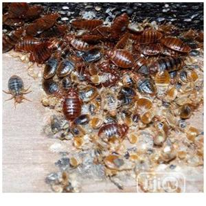Bed Bugs Exterminator and Fumigation Services | Cleaning Services for sale in Lagos State, Ifako-Ijaiye