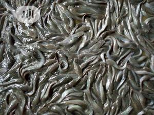 Live Catfish Melange | Livestock & Poultry for sale in Lagos State, Ikorodu