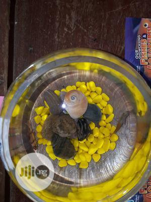 Exquisite Fish Bowl | Fish for sale in Lagos State, Victoria Island