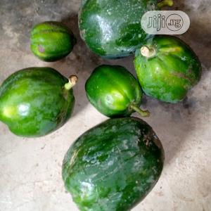 Dwarf Pawpaw Seedlings for Sale at Affordable Price | Feeds, Supplements & Seeds for sale in Oyo State, Ibadan