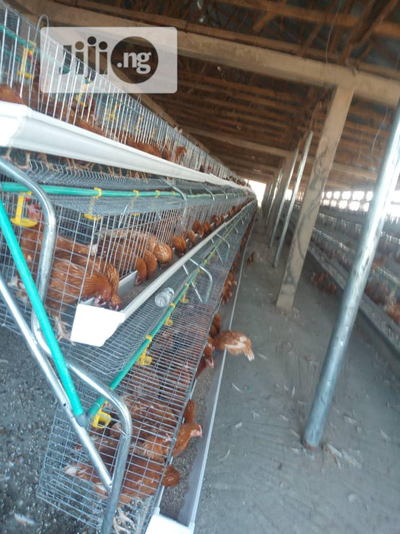 Fabricated Battery Cage With Imported Feeders