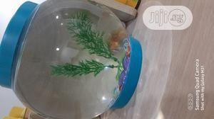 Fish Bowl, Aquarium and Accessories | Fish for sale in Lagos State, Lekki