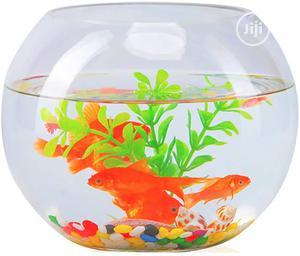 Full Bowl Kit   Fish for sale in Lagos State, Surulere