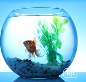 Aquarium Full Bowl Kit | Fish for sale in Lagos State, Surulere