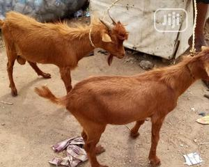 Fresh Killed Goat Meat For Sale | Meals & Drinks for sale in Lagos State, Ikeja
