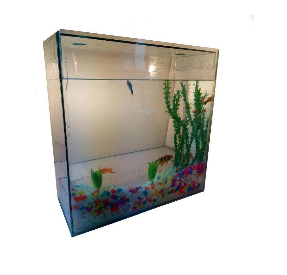 Archive: Large Size Affordable Aquarium (20x20x8 Inches)