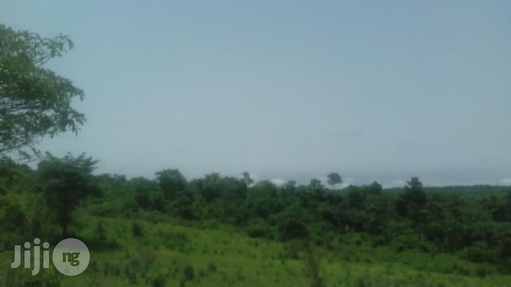 Fertile Farmlands for Rent Minimum of 4years   Land & Plots for Rent for sale in Ubiaja, Edo State, Nigeria