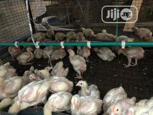 4 and 6weeks Broiler, Cockerels and Local Turkey | Livestock & Poultry for sale in Lagos State, Ikorodu