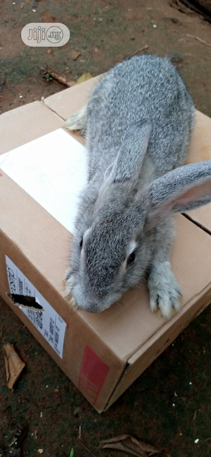 Rabbit Is Available for You Now