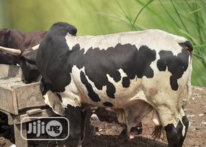 Cow, Ram And Goat   Livestock & Poultry for sale in Lagos State, Ikeja