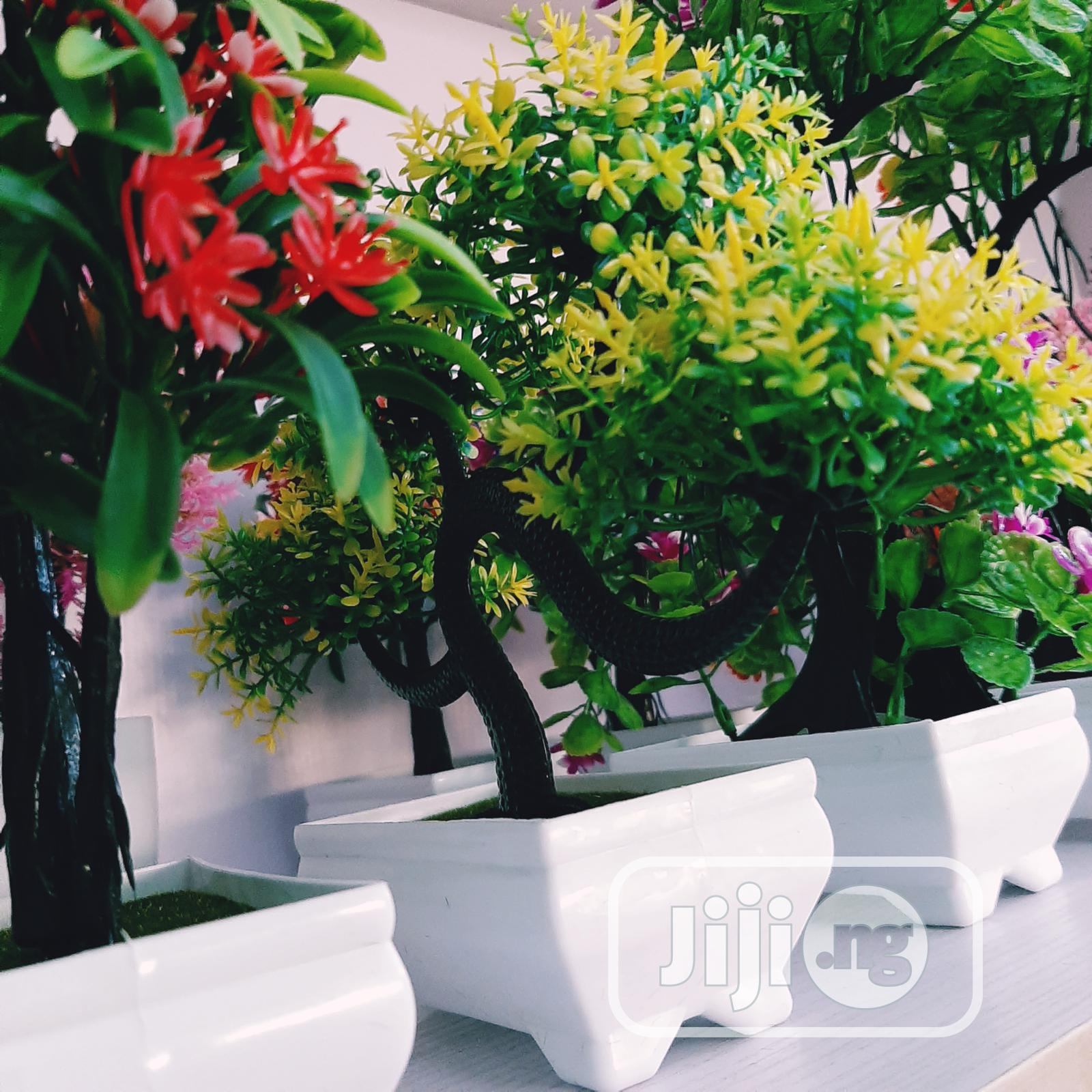 Bonsai Tree Natural Plants