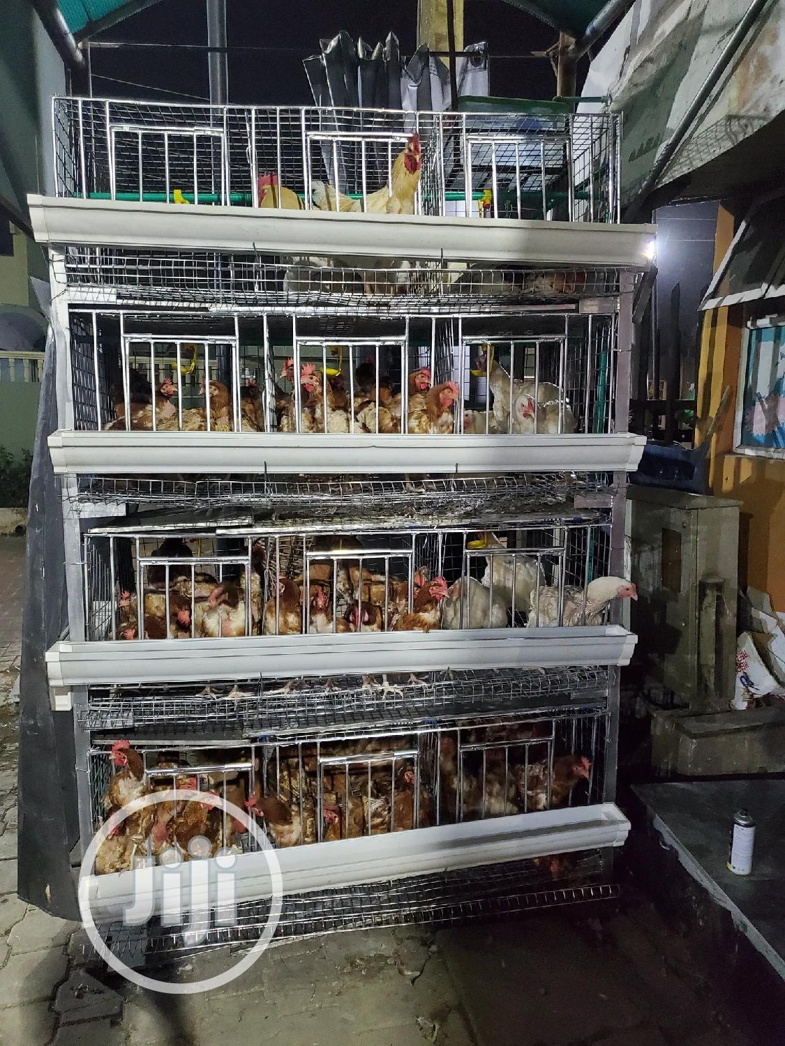 Broiler and Layer H Type Cage 160 Birds