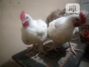 Matured Broiler Chickens for Sale | Livestock & Poultry for sale in Abuja (FCT) State, Kubwa