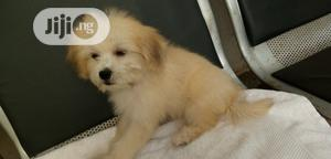 Dog Grooming Services | Pet Services for sale in Abuja (FCT) State, Gwagwalada